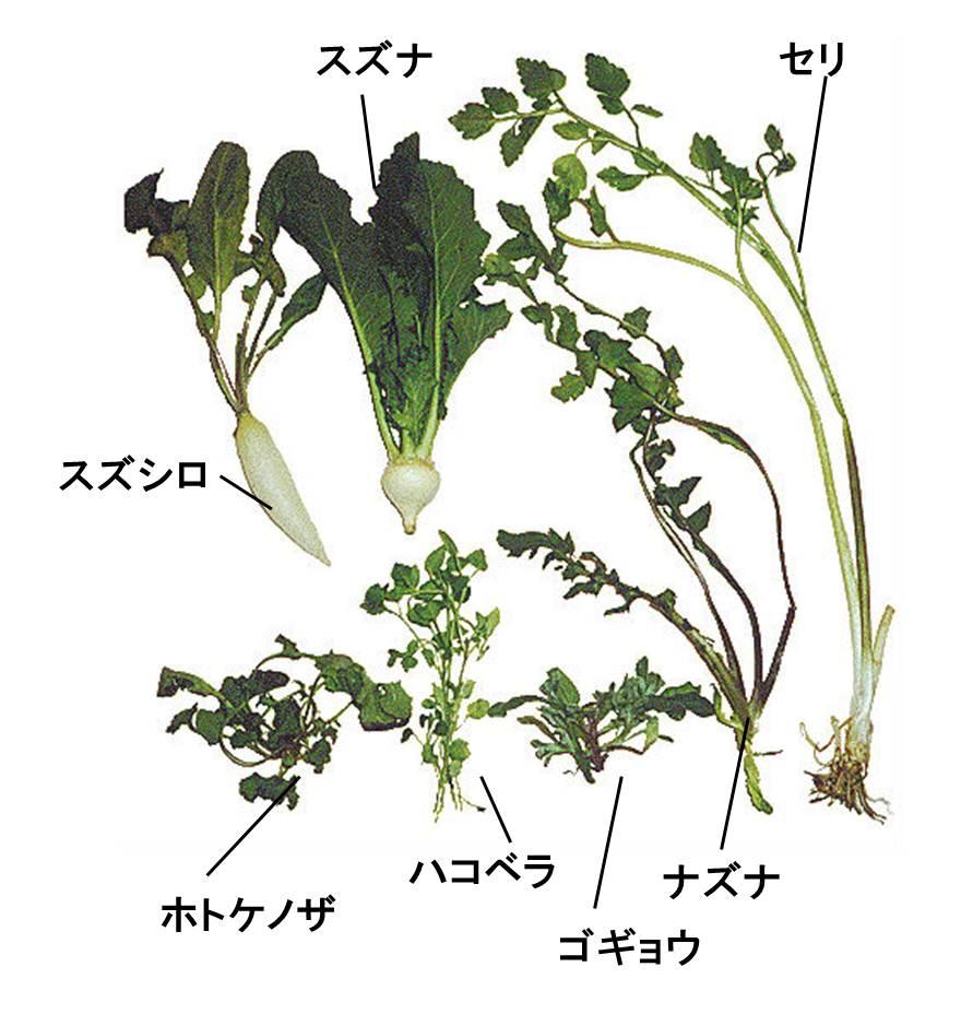 nanakusa4.jpg