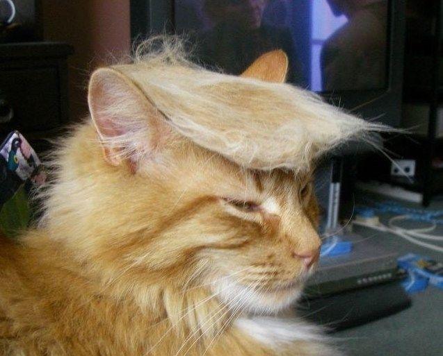 TrumpCat.jpg